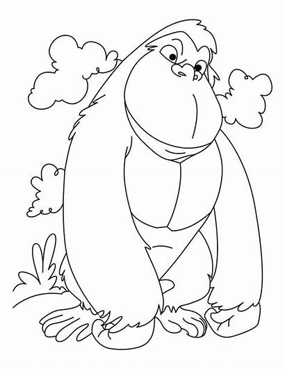 Gorilla Coloring Pages Cartoon Winner Animals Colouring