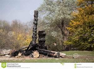 Achat Tronc Arbre Decoratif : tronc d 39 arbre br l photo stock image 33099830 ~ Zukunftsfamilie.com Idées de Décoration
