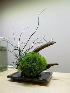 Japanisches Schlafzimmer Selber Machen : japanische deko idee originelle kokedamas selber machen ~ Markanthonyermac.com Haus und Dekorationen