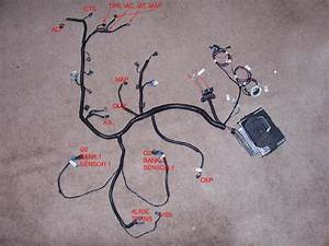 Ls Swap Wiring Diagram 1998