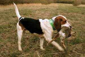 First Rabbit Hunt - Our Southern Roots | OSR - kennel ...