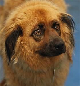 Lucas County Do... Dogs For Adoption