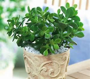 Le 15 piante da interno super resistenti! Prima parte Fito