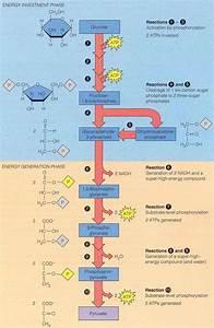 Pin By Becca Morrison On Molecular Biology