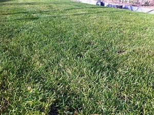 Spritzmittel Gegen Unkraut Im Rasen : essigs ure gegen unkraut essig und essigessenz gegen ~ Michelbontemps.com Haus und Dekorationen