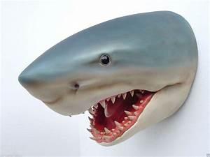 Shark - Shark Statue - Shark Head - Life Size Shark Head