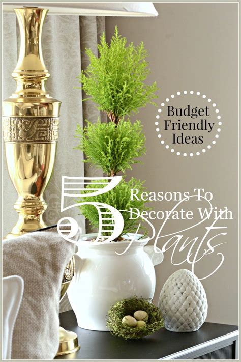 5 Reasons To Decorate With Plants Budget Friendly Decor