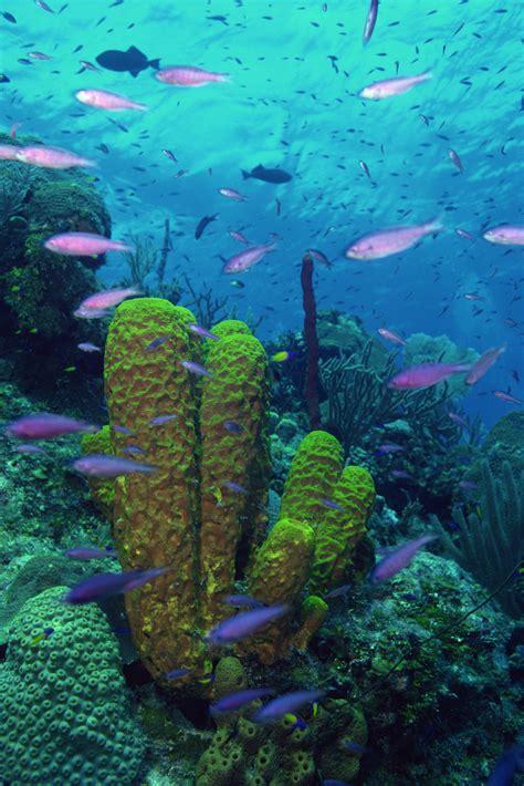 description    types  aquatic ecosystems