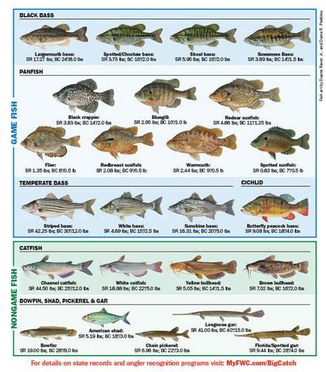 freshwater fish  florida florida freshwater fishing