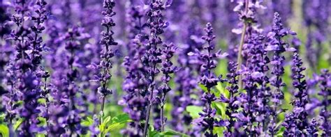 purple flowers choosing the right flowers for your garden
