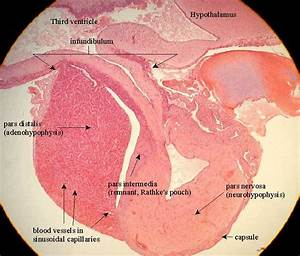 Anatomy And Physiology E