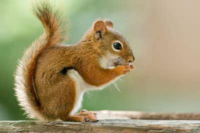 garten im winter dekorieren eichhörnchen füttern so machen sie es richtig
