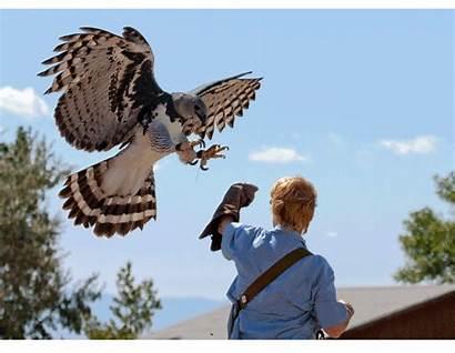 Harpy Eagle Prey Birds America Found Species