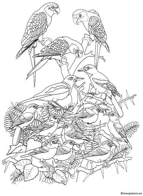 Escher Vogel Kleurplaat by Vogels Kleurplaten Kleurplaten Eu