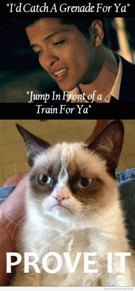 Grumpy Cat Coma Meme - 52 best images about best of grumpy cat on pinterest funny picture quotes cats and grumpy cat