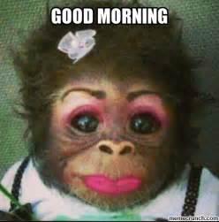 Meme Monkey - monkey funny meme