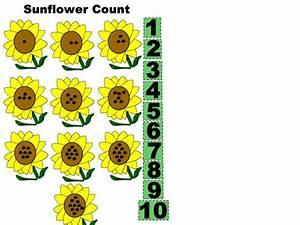 Sunflower Count Worksheet For Kindergarten