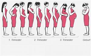 Geburtstermin Ssw Berechnen : 25 b sta schwangerschaftsverlauf id erna p pinterest ~ Themetempest.com Abrechnung