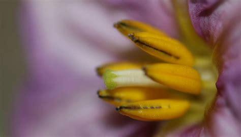 allergie nichel alimenti allergia al nichel e i finocchi vivere con le allergie