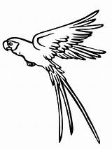 Parrot Flying Coloring Drawing Pages Colouring Printable Colour Clipart Parrots Water Drawings Atreyu Lee Getdrawings Desenhos Colornimbus sketch template