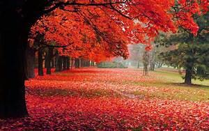 Schöne Herbstbilder Kostenlos : herbst hintergrundbilder kostenlos ~ A.2002-acura-tl-radio.info Haus und Dekorationen