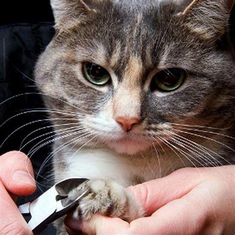 cat parents  declawing ibiyaya