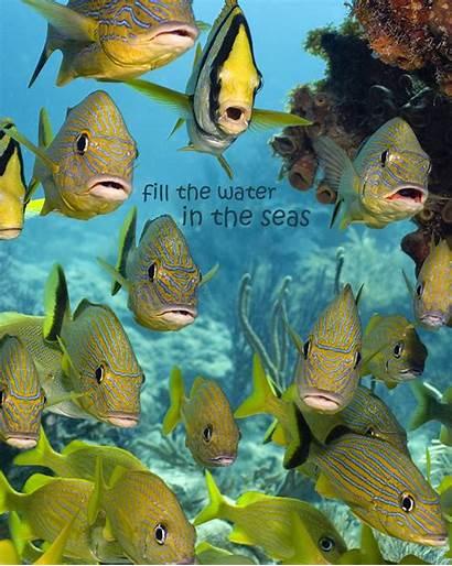 Water Marine Keys Florida Fill National Sanctuary