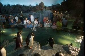 Penguin & Puffin Coast :: Saint Louis Zoo