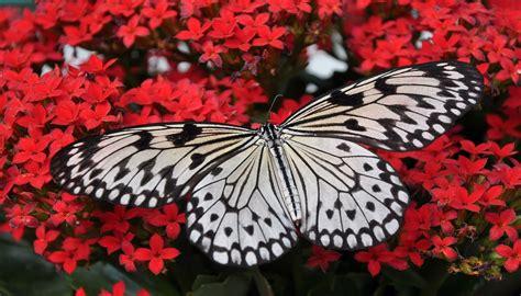 In Sardegna Apre 'la Casa Delle Farfalle