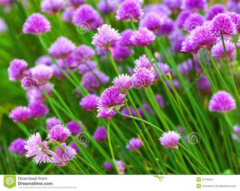 herb florist herb flowers stock images image 2713524