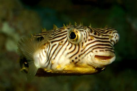 animals meet  animals   south carolina aquarium