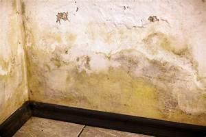 Feuchtigkeit In Der Wand : schimmel an der wand werden sie den schimmel los ~ Sanjose-hotels-ca.com Haus und Dekorationen