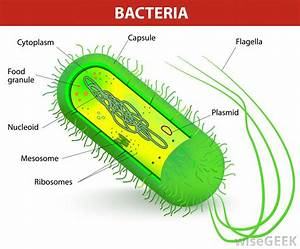How Many Species Of Bacteria Are There   With Pictures