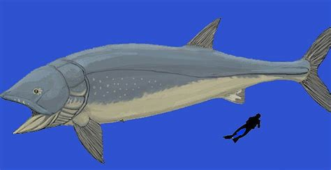 The problem is that, although leedsichthys is known from dozens of fossil remains from around the world and weights of over 50 tons. 10 Craziest Extinct Fish We'll Never Catch PICS