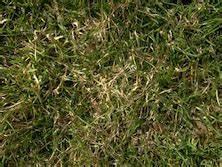 Rasen Vertikutieren Zeitpunkt : emmenegger gartenbau ~ Orissabook.com Haus und Dekorationen
