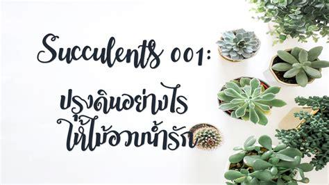 Succulents 001: ปรุงดินอย่างไร ให้ไม้อวบน้ำรัก | TrueID In ...