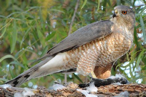 what do birds eat bird eating habits diets