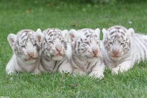 chambre enfants pas cher top parents fr zoo de beauval parc animalier et hôtel