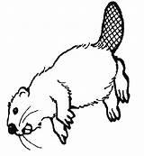 Beaver Canadian sketch template