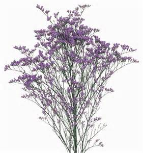 dried flower arrangements limonium altaica montana limonium flowers 39 catalog export