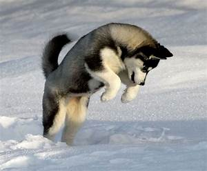 Adorable Dogs in the Snow - Mooshworld.com | by Olga Kay