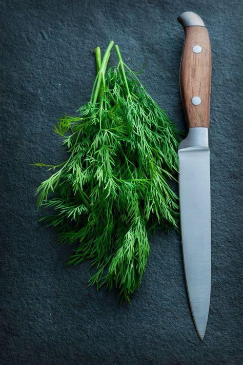 herbes aromatiques cuisine 1000 idées sur le thème herbes aromatiques sur