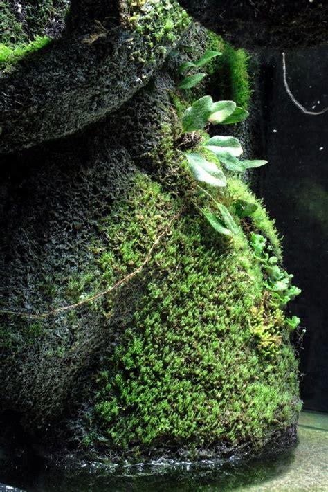 epiweb moss mix   aquarium plants moss