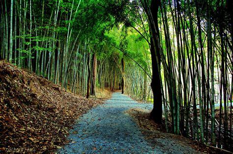 incredible forest  hiding    alabama
