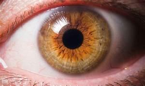 How Lipids Prevent Dry Eyes