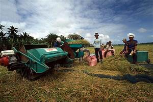 IRRI - Rice for intensive production systems