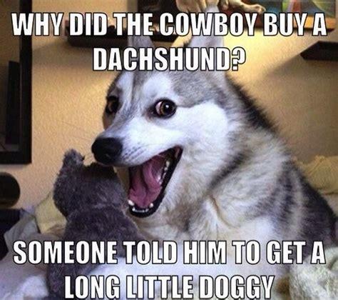 cowboy buy  dachshund  told