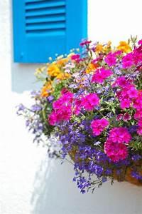 Blumenkästen Bepflanzen Ideen : 55 balkonbepflanzung ideen tolle blumen f r balkon arrangieren balkon pinterest ~ Eleganceandgraceweddings.com Haus und Dekorationen