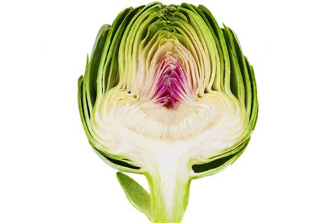 comment cuisiner les artichauts violets l 39 artichaut comment le cuisiner