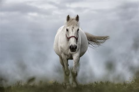 horse horses mustang animal mare animals mane stallion nature pasture mammal pxhere